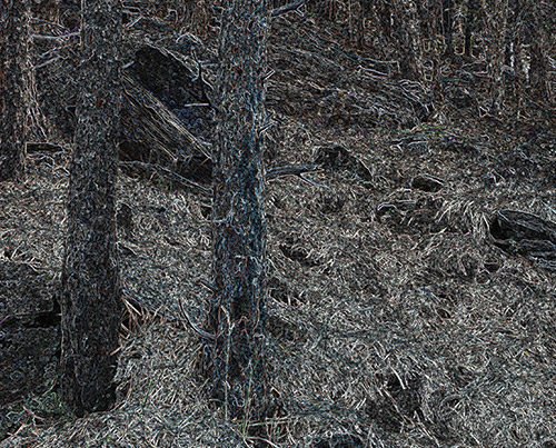 String Forest - String Theory - Richard Jacobi